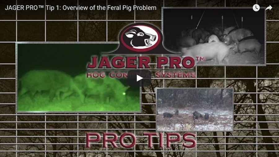 Pro Tip 1: Overview of the Feral Pig Problem