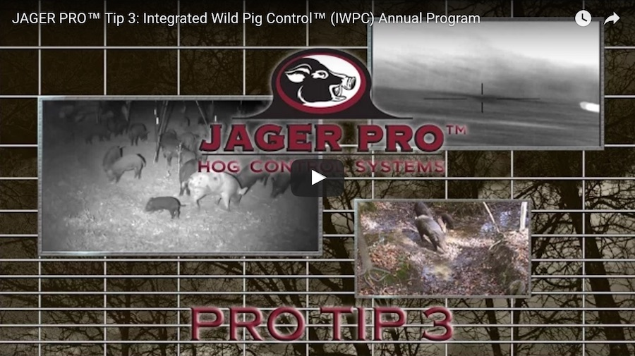 Pro Tip 3: Integrated Wild Pig Control<sup>®</sup> Annual Program