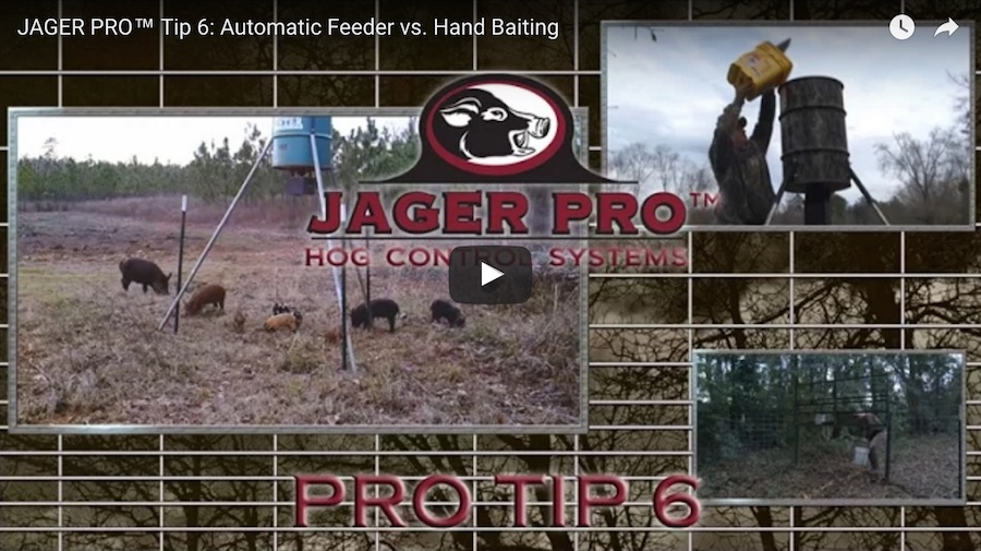 Pro Tip 6: Automatic Feeder vs Hand Baiting