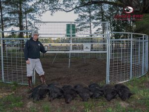 MINE Trapping Gate with 7 eradicated hogs