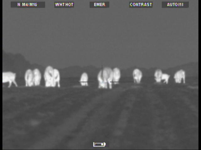 Winter Hog shooting With Thermal Optics