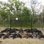 M.I.N.E.™ Gate with AT&T Control Box Eliminates Wild Pigs