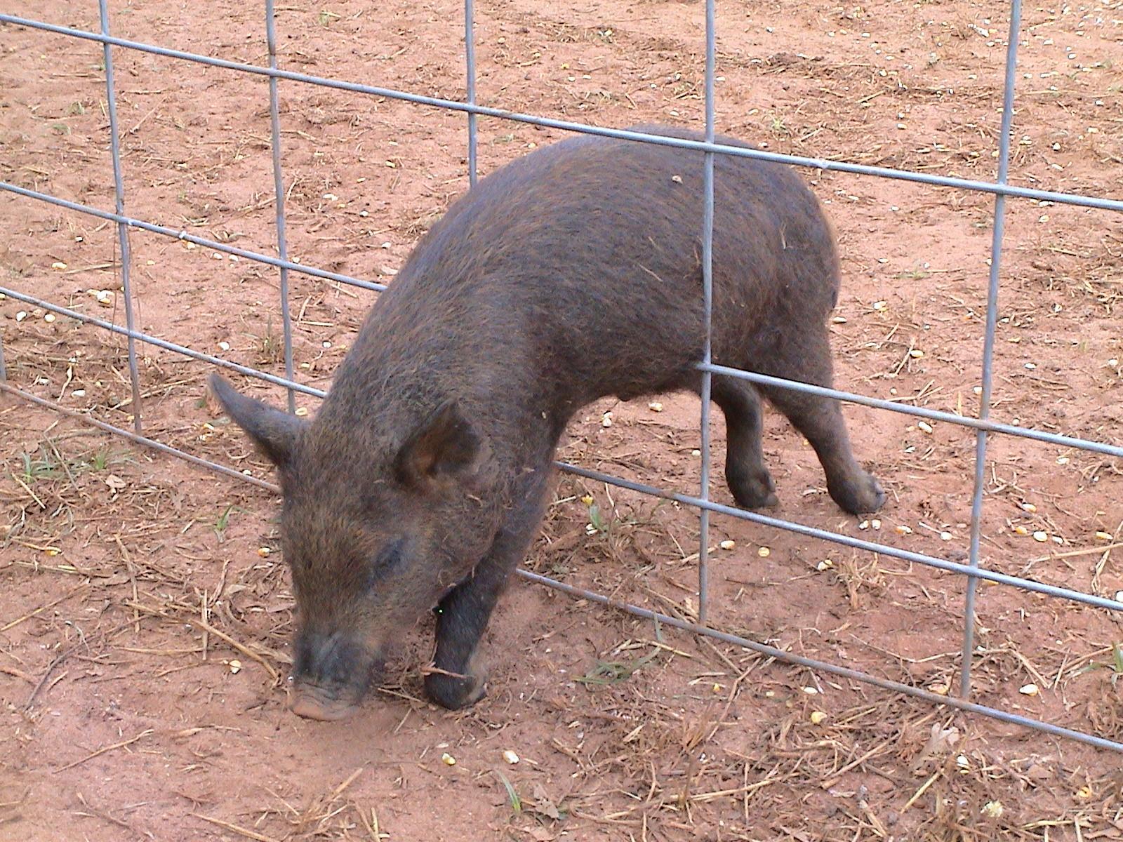 Livestock Gates And Panels